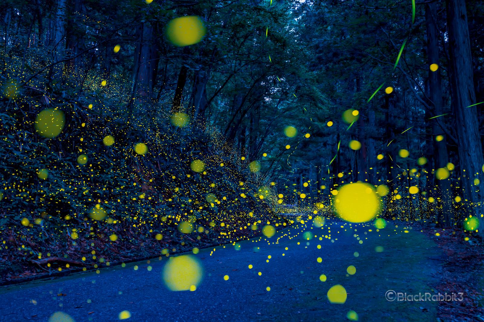 光の小道(広島県)