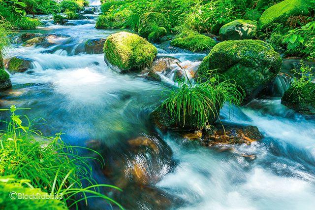 奥大山、木谷沢渓流(きたにざわけいりゅう、鳥取県 日野郡江府町)