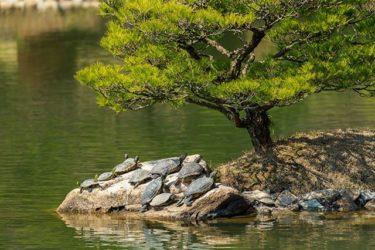 縮景園の亀さん(2017/03/11)